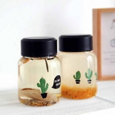 Cactus Mini Glass Bottle Tumbler Mug Flask Style Degree Sg Singapore