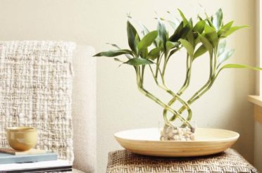 4 Easy Feng Shui Tips: A Guide For New Homeowners & Beginners