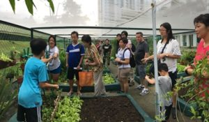 Community gardening, Eco-friendly, Sustainable living, Ways to live sustainably for homeowners, Style Degree, SG, Singapore, StyleMag
