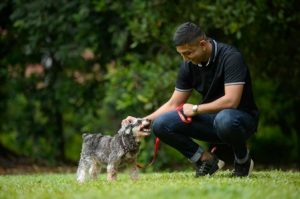 Pet sitting services Singapore, home services Singapore, Style Degree, SG, Singapore, StyleMag