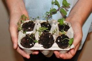 Upcycled Egg Carton Seed Starter, Upcycling, Style Degree, Singapore, SG, StyleMag