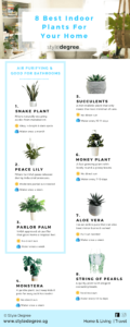 Best Indoor Plants, Low Maintenance, Growing Indoor Plants, Style Degree, Singapore, SG, StyleMag