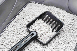 Neutralise bad odours with kitty litter, how to remove post renovation smell, how to get rid of new furniture smell, Style Degree, Singapore, SG, StyleMag.