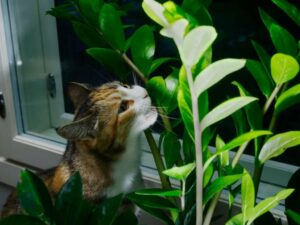 Keeping pets away from houseplants, how to keep pets away from plants, how to stop pets from destroying plants, Style Degree, Singapore, SG, StyleMag.