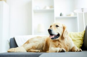 Pet friendly sofa materials, pet hair resistant fabric, pet-friendly home ideas, Style Degree, Singapore, SG, StyleMag.