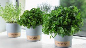 Herb garden ideas, Kitchen herb garden, Singapore, SG, StyleDegree, StyleMag